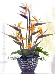 Luxury Strelitzia Arrangement