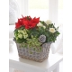 Christmas Planted Basket
