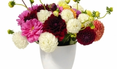 Newcastle Flowers, On-line Flower Delivery