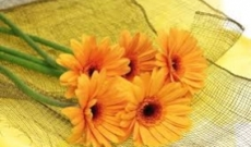 Select the best Autumn Flowers Newcastle With the Help of Florists